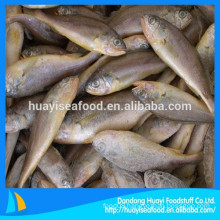 frozen yellow croaker sales well in this season